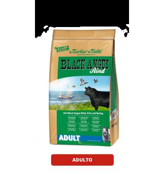 Black Angus Adulto